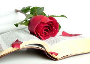 rosas-y-libros